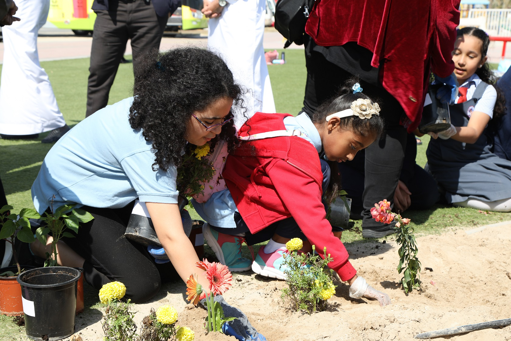 "The municipality of ""South"" is planting 250 seedlings and 20 seedlings in the Independence Walk"